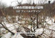 白神自然観察園の動物(2)フィールドサイン