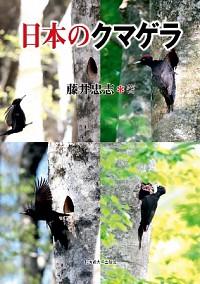 日本のクマゲラ